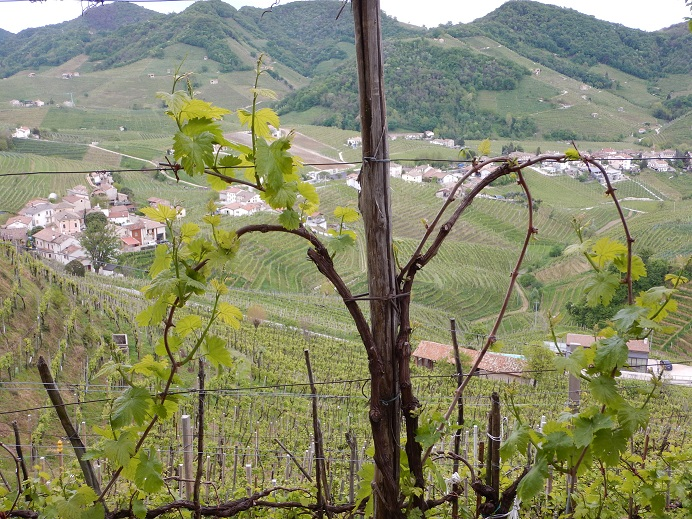 The Cartizze subzone, with its south-facing hillsides, is considered one of the top spots in the Conegliano Valdobbiadene DOCG. (Photo by Steve Jankowski)